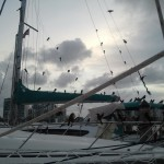 Attack of the birds. Pelican Harbor Marina 2012