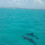They swam around our boat for hours!
