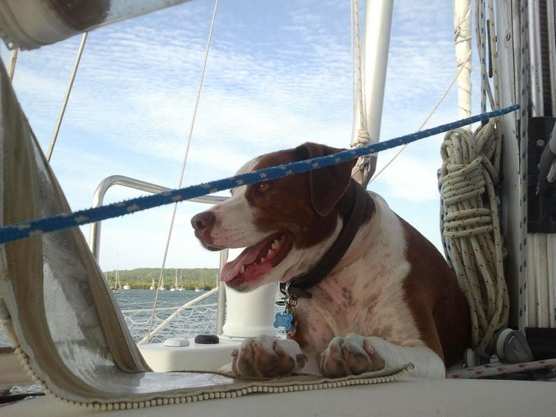 Beau enjoying the view