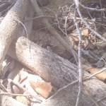 Where-gecko