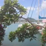 Marin-Martinique