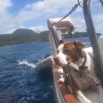 Beau-loves-sailing