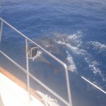 Tons-of-dolphins-swam-by-the-boat
