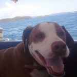 A-happy-dog-and-in-the-background-Dog-Islands
