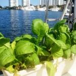 Lettuce be thankful
