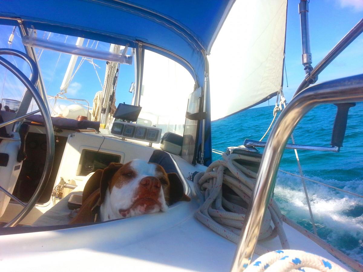 Sailing-Beau